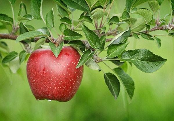 Người bị bệnh tim nên ăn gì?