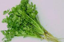 Những lợi ích đối với sức khỏe của rau mùi mà ít người biết
