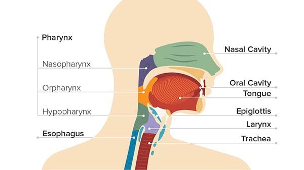 Điều trị bệnh ung thư vòm họng bằng cây lược vàng