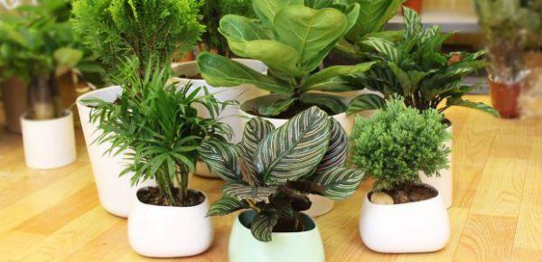 Người tuổi Quý Hợi 1983 nên lựa chọn những loại cây có màu xanh nước biển