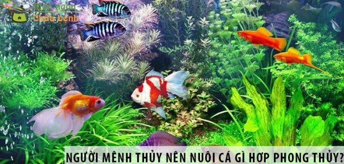 Người mệnh Thủy nên nuôi cá gì hợp phong thủy?