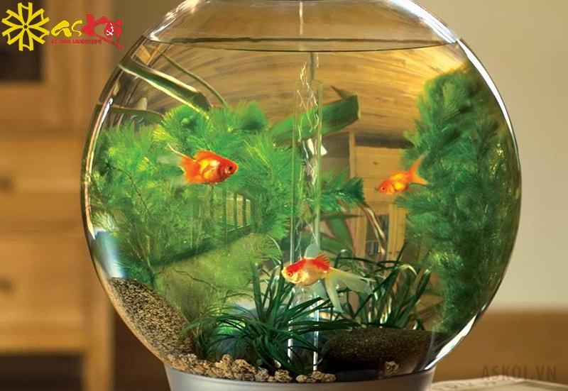 Người mệnh Thủy nên đặt bể cá hình tròn